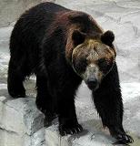 上の動物園熊